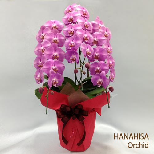 還暦祝い 60歳誕生日 花 胡蝶蘭
