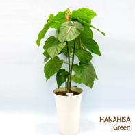 横浜 花屋 観葉植物